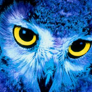 spirit animal owl